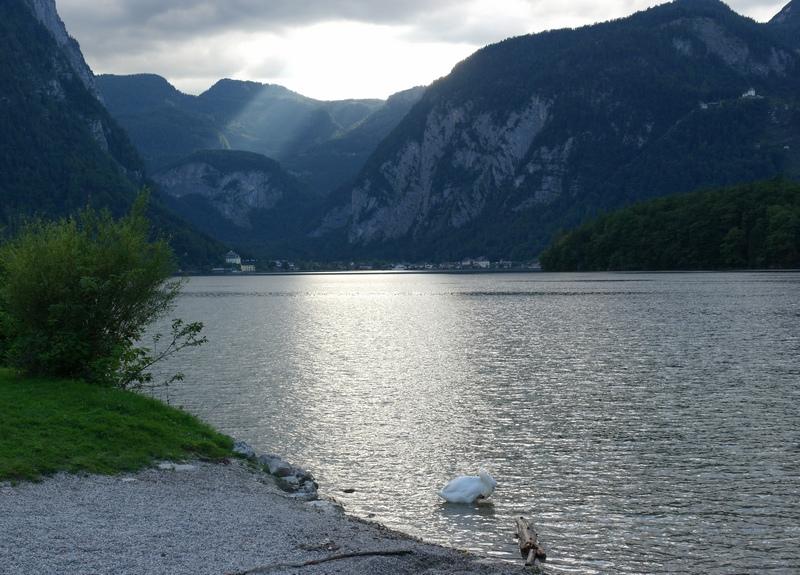 Лебедь и Альпы1