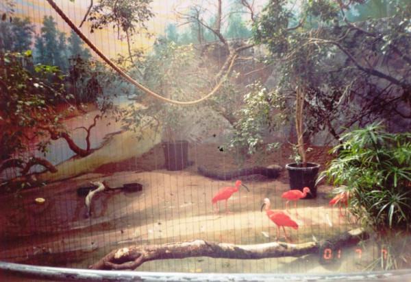 Зоопарк. Фламинго