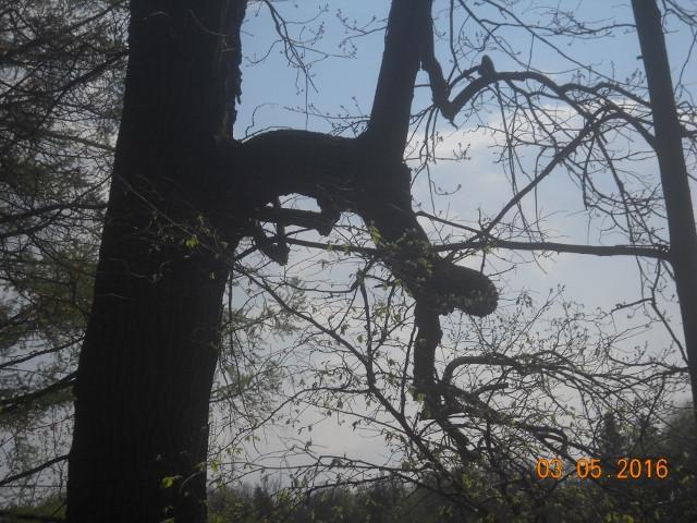 А кто на дерево забрался