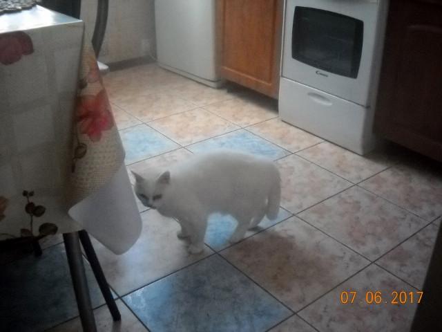 Малышка в кухне