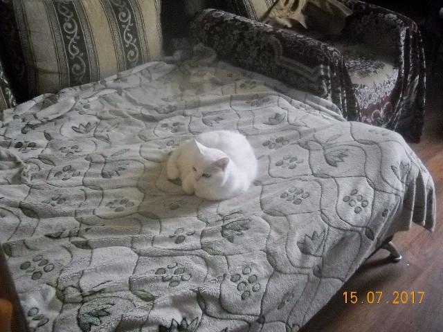 Малышка на диване