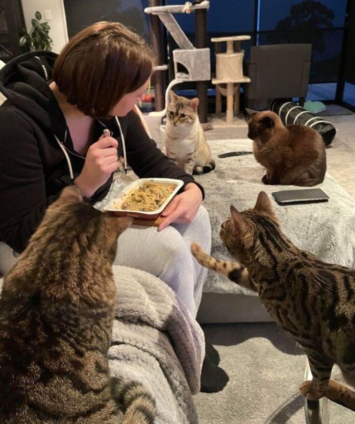 Лучший рецепт для похудения – большое количество кошек
