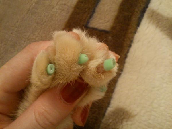 Кот ребенку поцарапал глаз