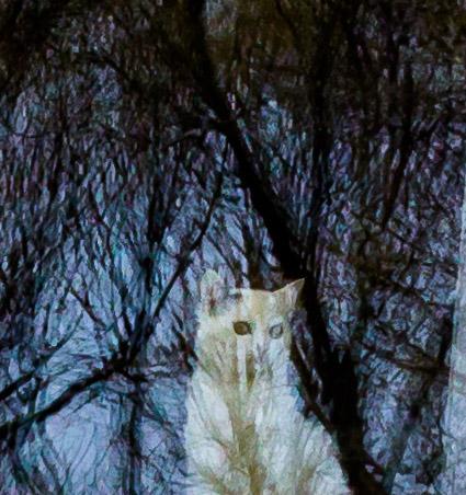 1. Котик