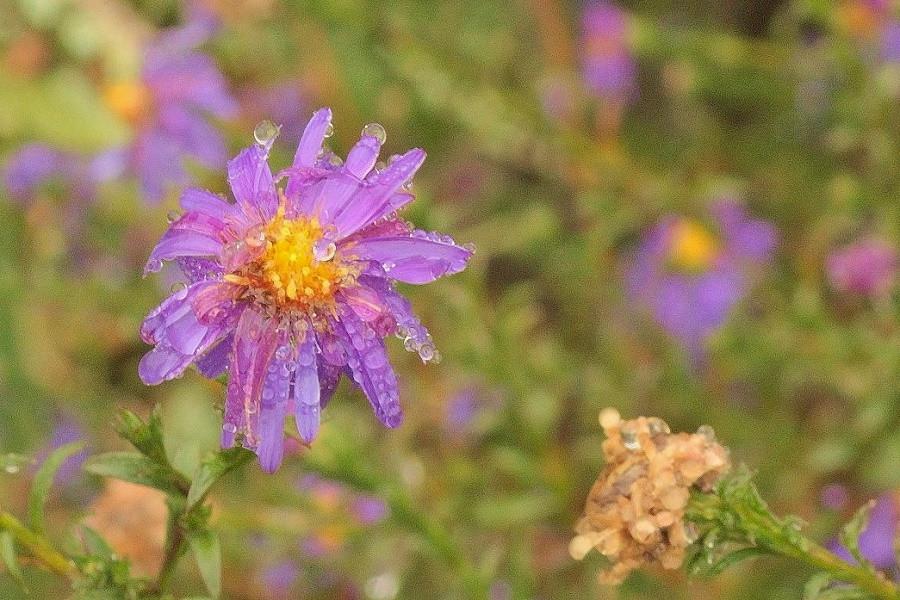 цветы дождь-1