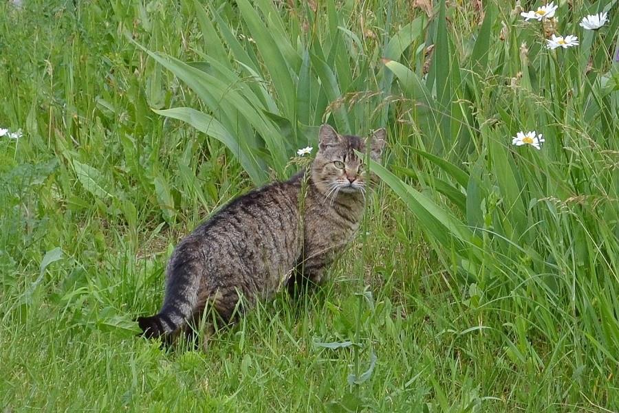 кот в траве.JPG