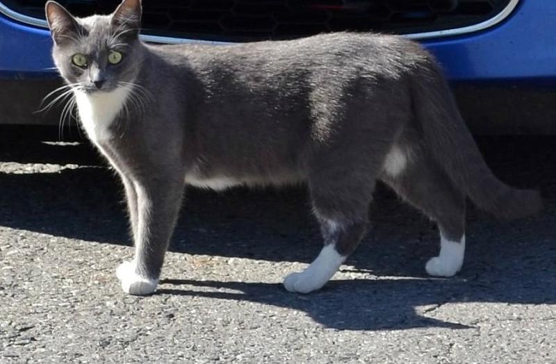 удивленный кот.JPG