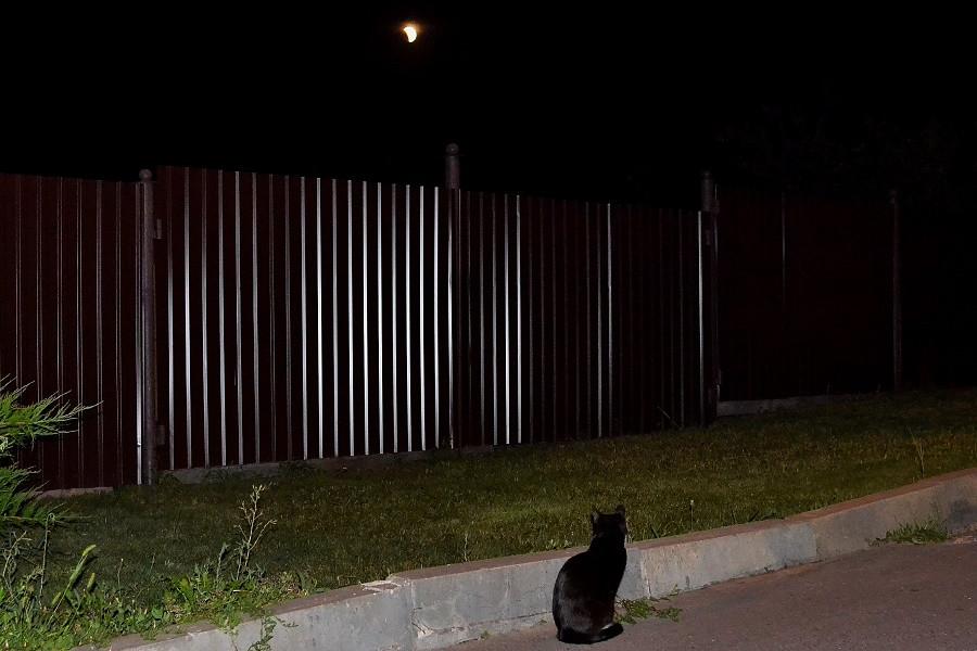 черный кот и луна.jpg