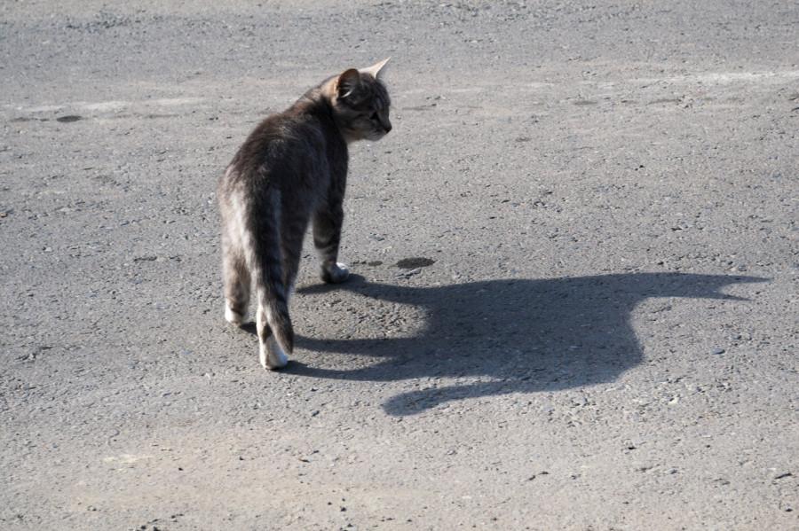 кот и тень