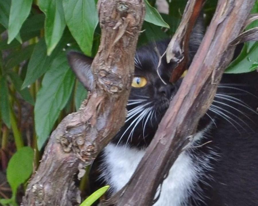 пограничный кот.JPG