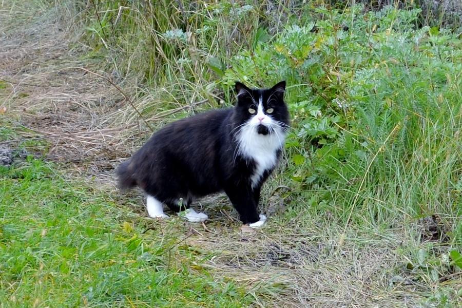изумительный кот