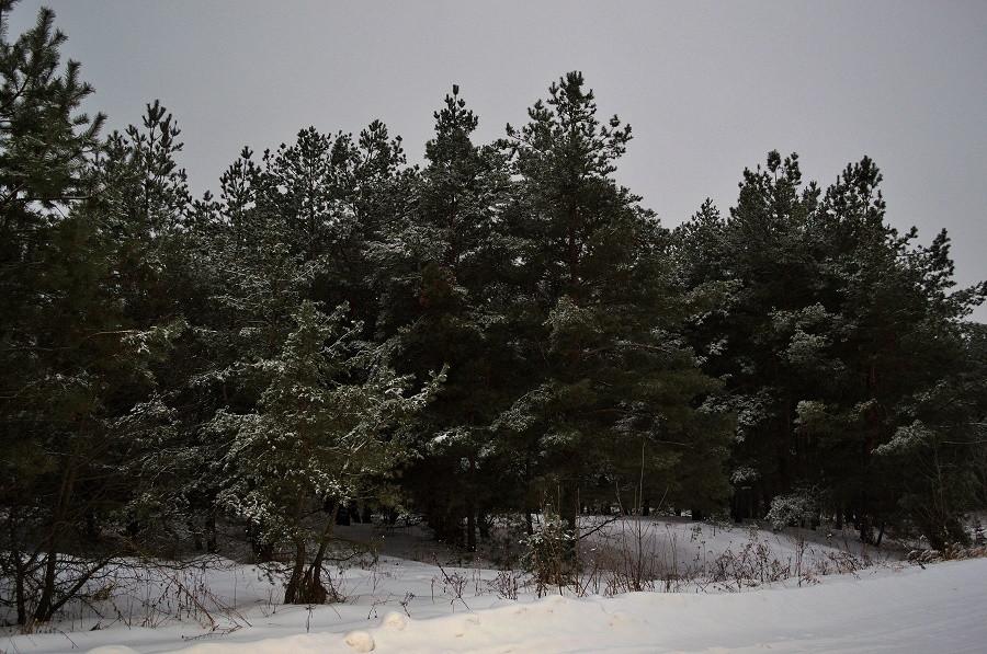 лес в январе
