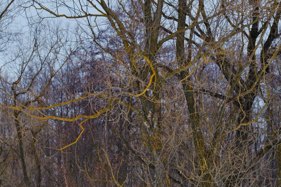дерево и ветви