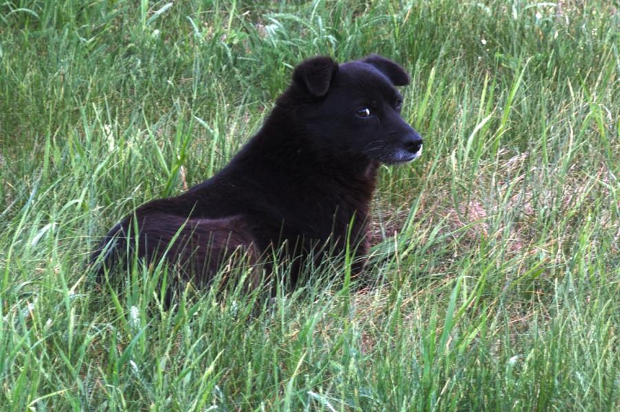 пес в траве