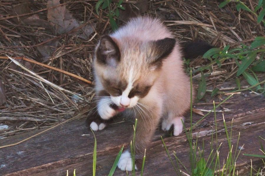 умывание котенка