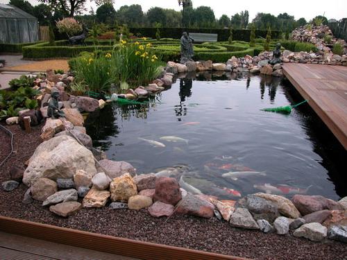 Декоративный пруда для содержания карпов кои