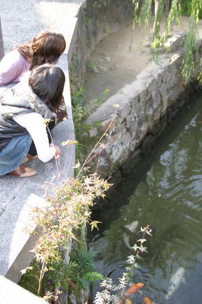 Дети кормят карпов кои в канале