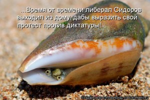 kotomatritsa_zKS