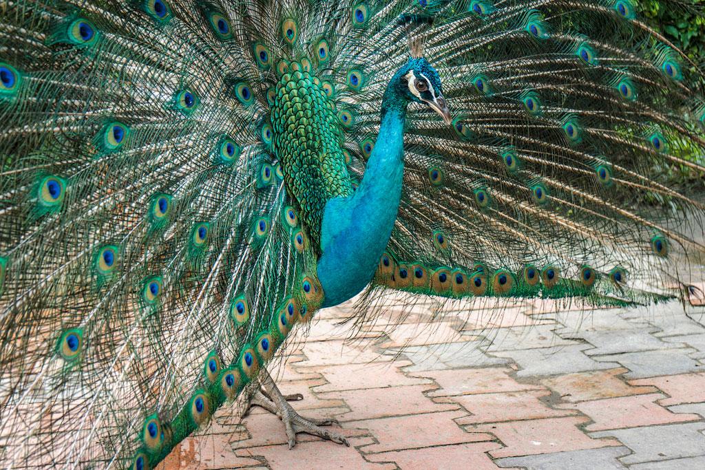 Отзыв о парке птиц в Куала-Лумпур. Что посмотреть в Куала-Лумпур.