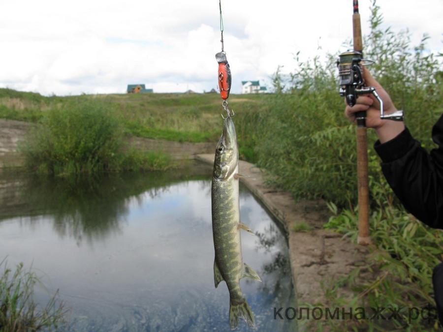 Рыбалка в коломенском районе
