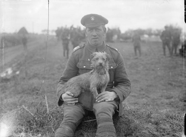 Sammy, the mascot of the Northumberland Fusiliers