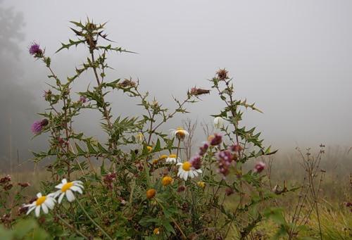 0_2f844_b17fbfb3_L.jpg в тумане