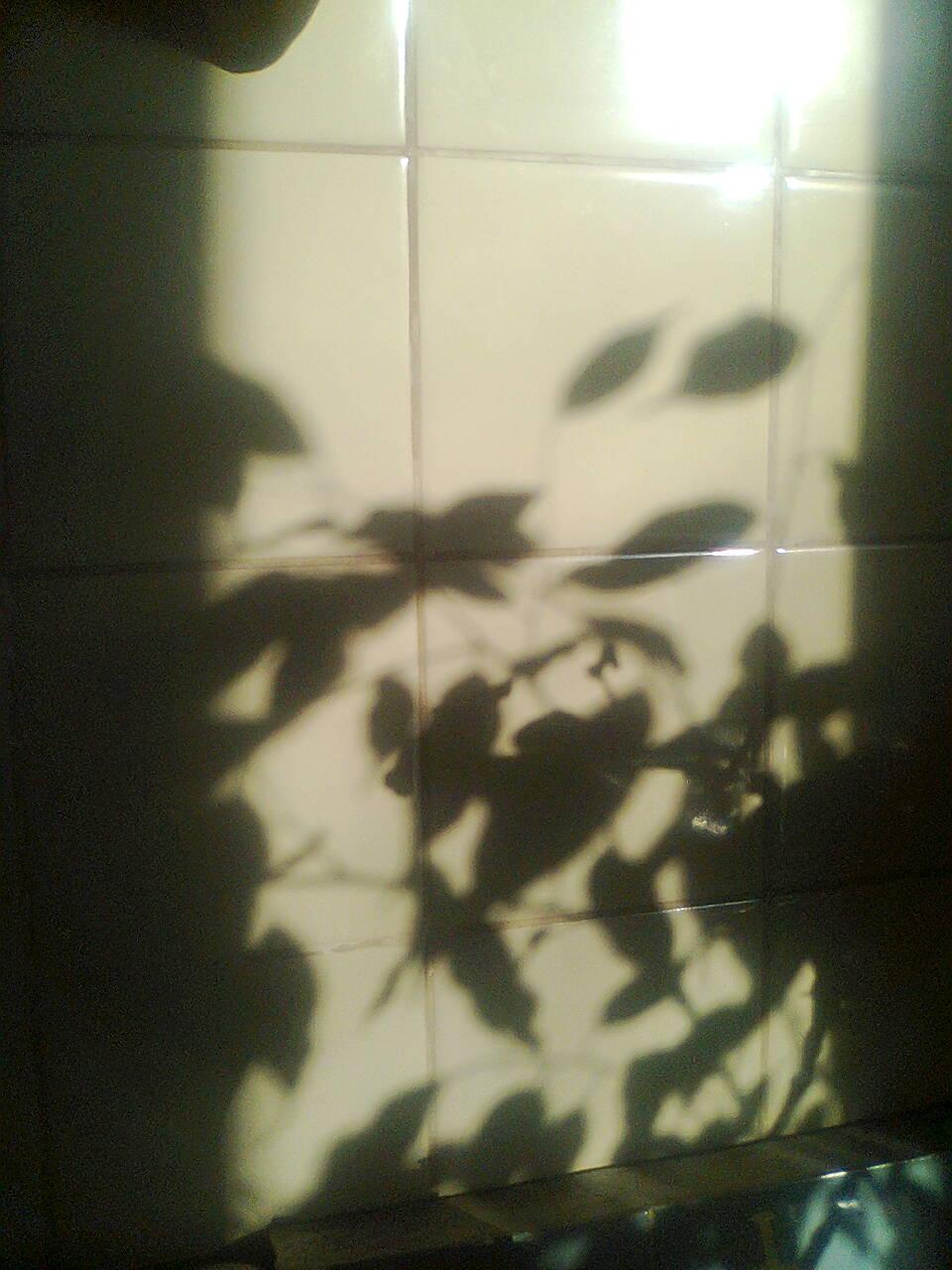 Фото0047.jpg тени 21 01 2014