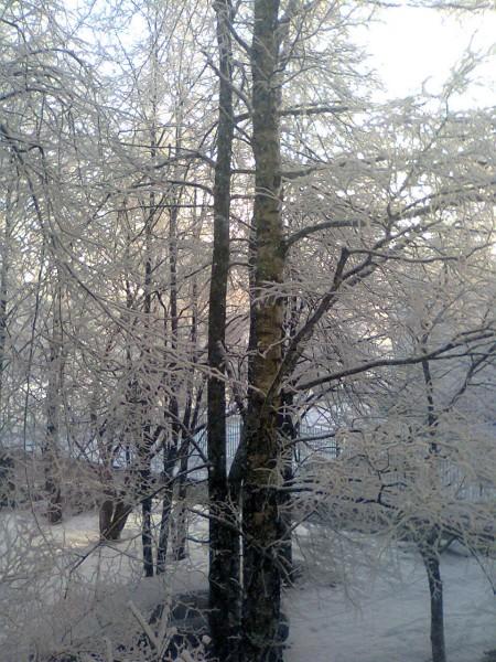 Фото0277.jpg 22.01.2015 мороз_и_солнце_5