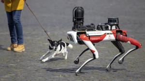 ИИ собака.jpg