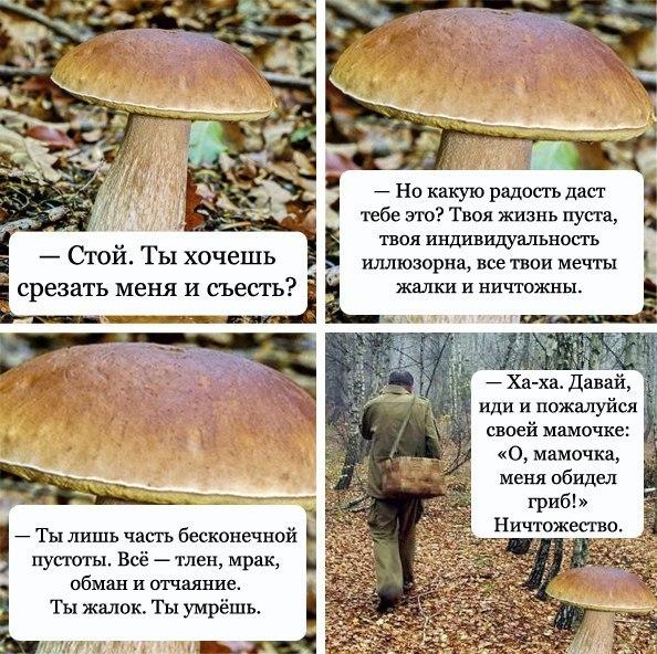 меня обидел гриб