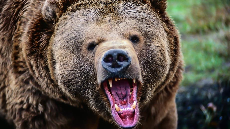 bear_roaring_www_nastol_com_ua
