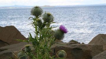 Scotland_thistle_egret_www_inosmi_ru