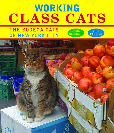 Working-Class-Cats_-004