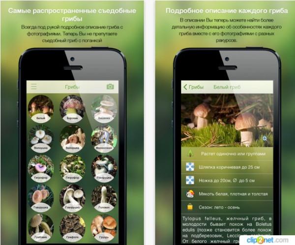 мобильные приложения для грибников