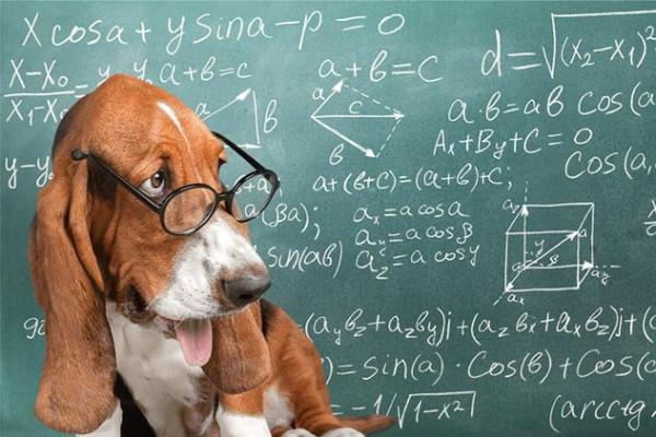 Топ 9: Интересные факты о разуме собак