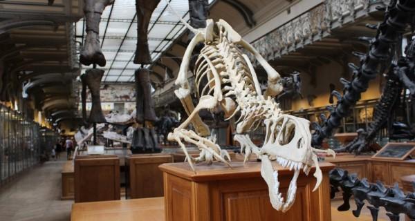 Физиология птерозавров поможет создать новые летные технологии