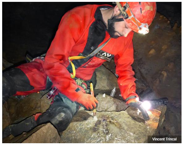 Что забыли динозавры в глубоких пещерах