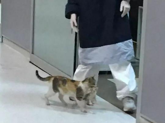 Умная бродячая кошка принесла больного котенка в больницу – врачи помогли