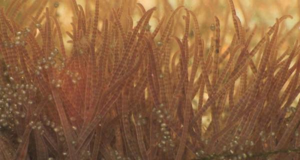 Ученые напоили червей спиртом и заставили их вращаться в воде