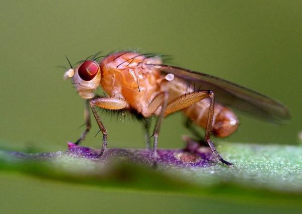 Как спят мухи в новых трудных условиях, к которым нужно приспосабливаться