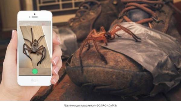 В Австралии разработали приложение для распознавания пауков и змей