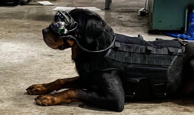 Армия США разрабатывает систему дополненной реальности для военных собак