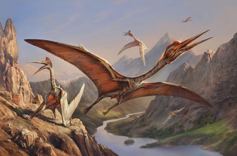 Выяснилось, как птерозавры учились летать + ролик о 10-и малоизвестных подвидах