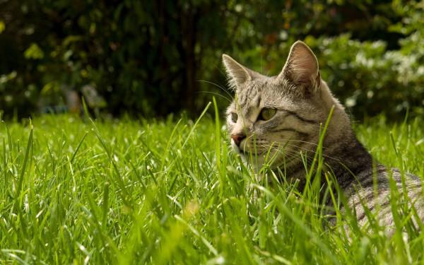 Как отучить домашних кошек от охоты