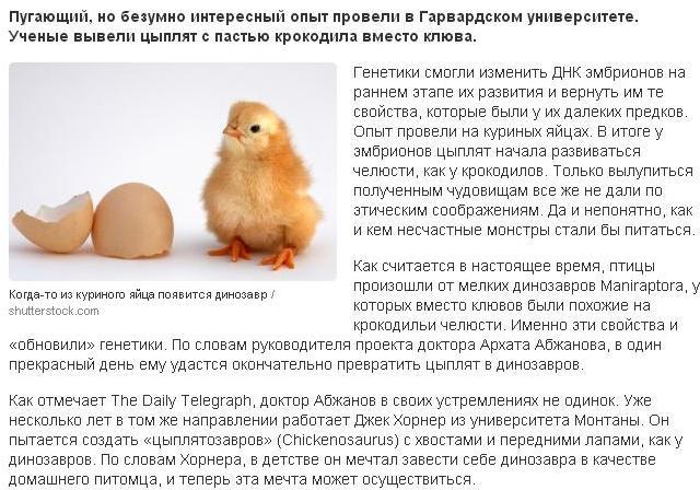 0.2 цыплята