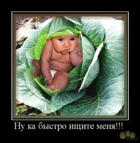 ребенок в капусте