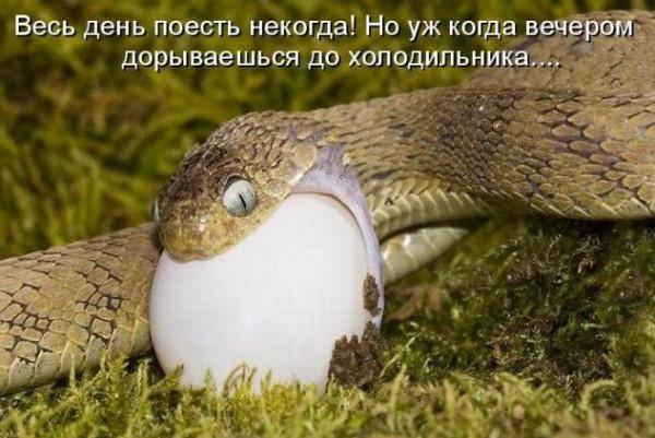 змея и яйцо