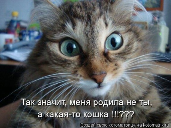 1280467961_kotomatrix_44