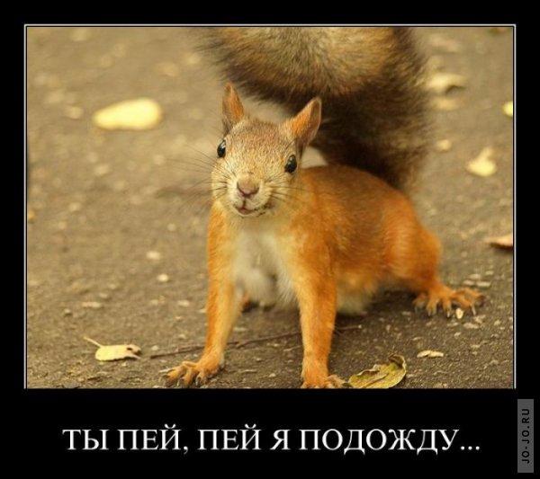 1312525550_demotivatory_11