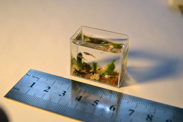 Le  plus petit aquarium du monde ne contient que 2 cuillères S640x480